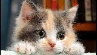 Советы заводчикам беспородных кошек