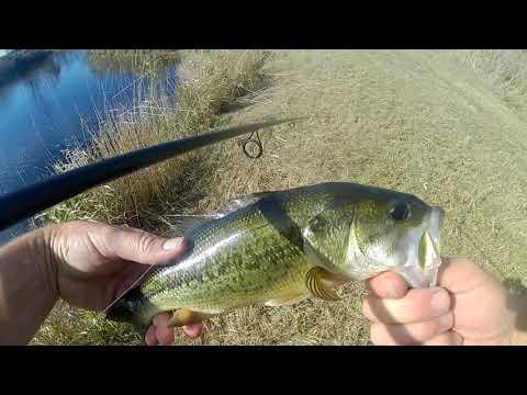Bass Fishing Hamilton Ontario Canada, 36 Bass, One Hole, Good time : Axe Man and Old Guy Fishin