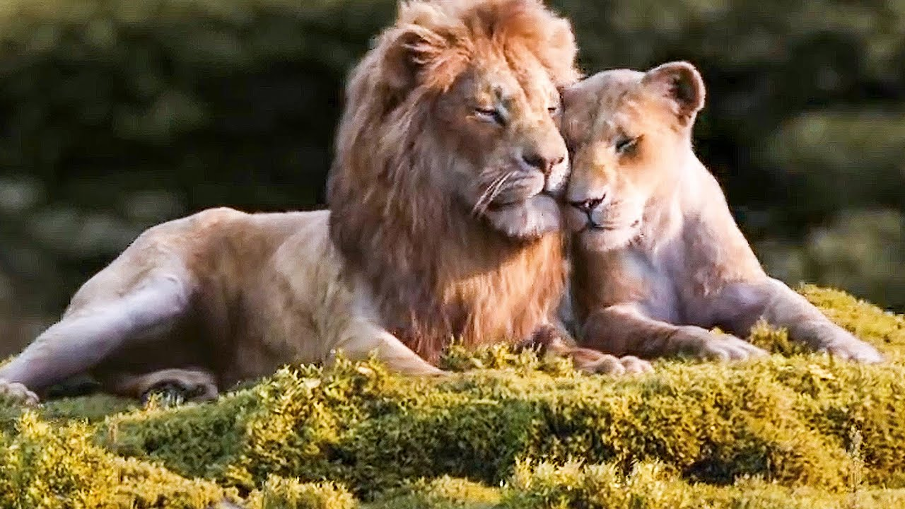 Beyonce Sings Can You Feel The Love Tonight Song The Lion King Sneak Peek 2019