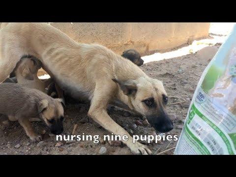 SOS: Emaciated Mom & Pups Need Help!
