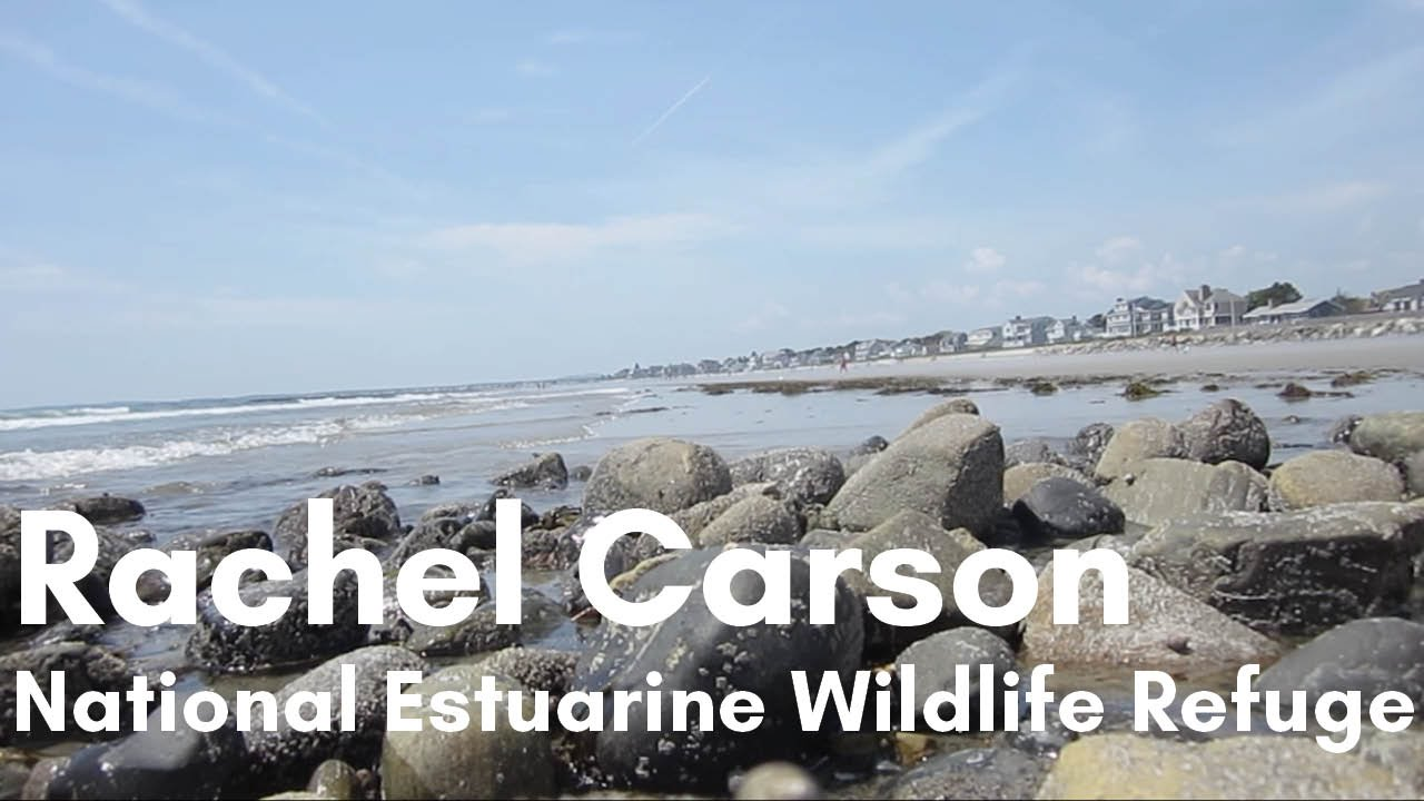 Rachel Carson National Estuarine Wildlife Refuge Wells Maine