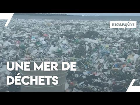La mer de Saint-Domingue COMPLÈTEMENT couverte de déchets!