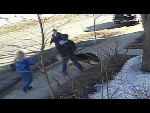 Security cameras capture family dog stolen from Riverside home - Sudbury News
