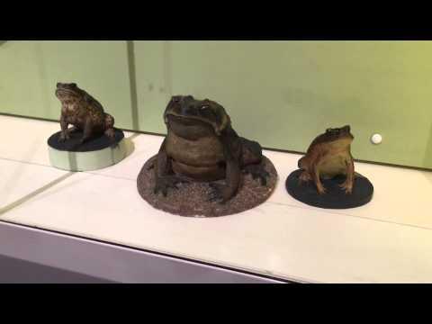 Queensland Museum Quickie Video Walkabout in Brisbane, Australia