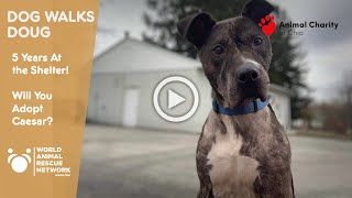 Dog has Been at Shelter 5 Years - Watch Dog Walks Doug and See If You Want To Adopt Caesar
