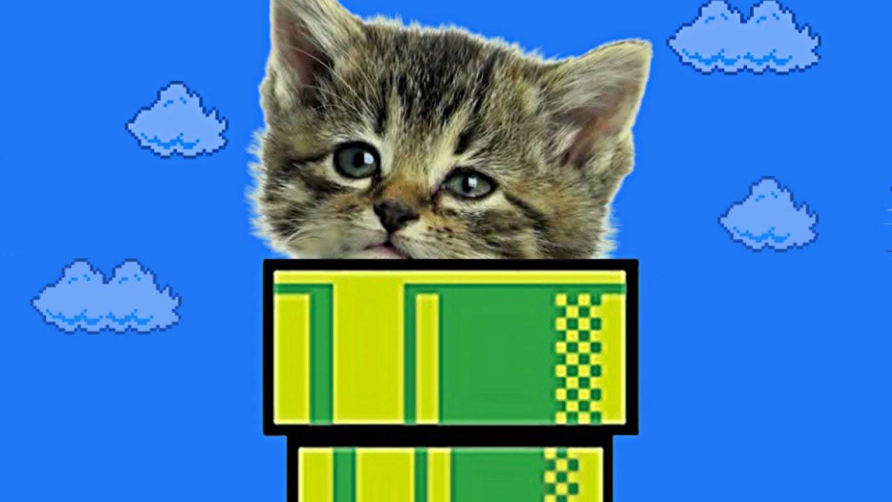 Кот и кошка видео игры