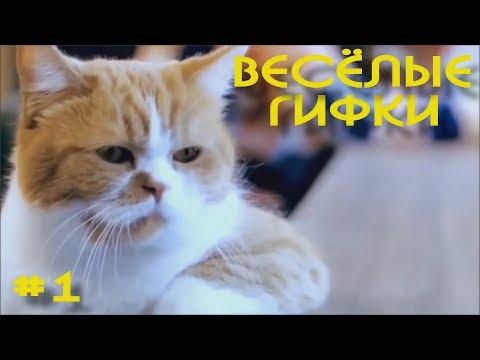 Апгрейд прикольных гифок #1