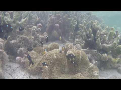 Two Monkeys Snorkelling at Matemwe