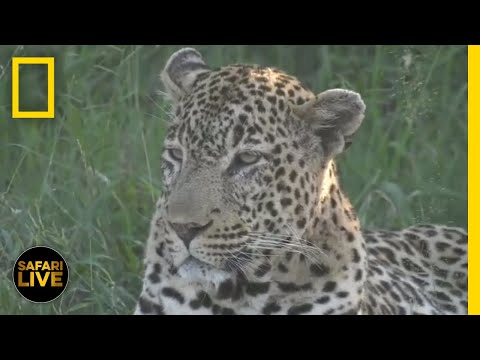 Safari Live -