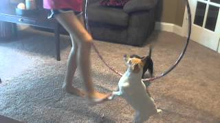 How =to Teach Your Dog To Jump Thru A Hula Hoop!