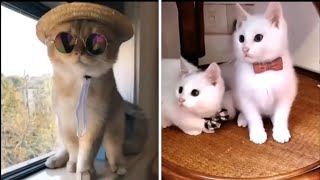 Cat Videos to Make You Smile! Cute and Funny Cats compilation