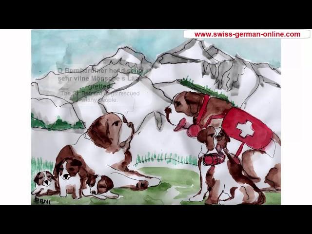 St. Bernard dog. Swiss German conversation lessons