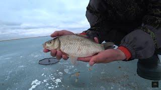 Ловим карася! Оз Майбалык! Закрытие зимней рыбалки 2019! Казахстан!
