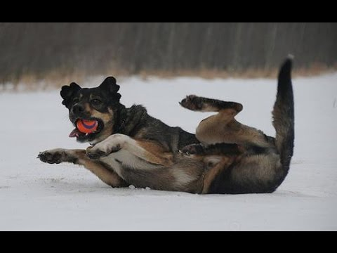 Funny Animals Slipping on Ice Compilation 2015