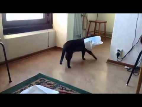 Cats in Plastic Bags (FUNNY compilation video)