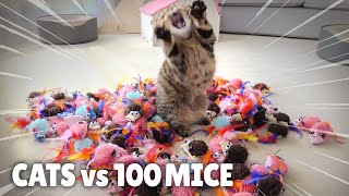Cats vs 100 Mice | Kittisaurus