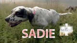 Sadie - It