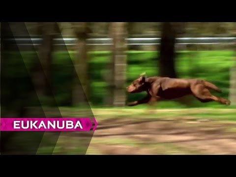 How Does A Dog ... Run? | video 2