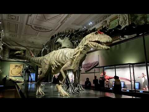 Travel diary entry#8| Visiting the museum of natural history in Vienna