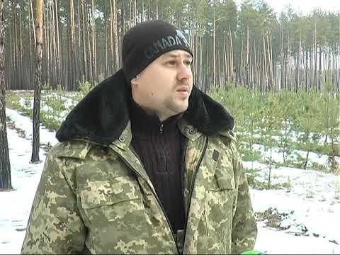 ObjectivTv: Від 80 до 400 гривень: скільки коштує ялинка на Харківщині
