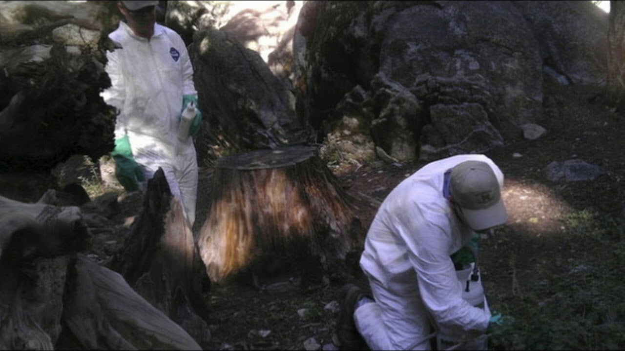 California confirms first human case of the plague in 5 years: What to ...