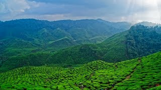 Cameron Highlands (Malaysia) by drone in 4K