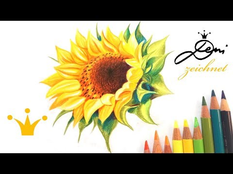 🌻 Sonnenblume zeichnen