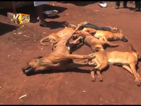 Six dogs that mauled late Nyeri Governor's grandson to death exterminated