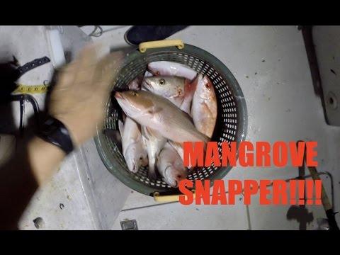 DEEP SEA FISHING FLORIDA: 66 MANGROVE SNAP NIGHT BITE