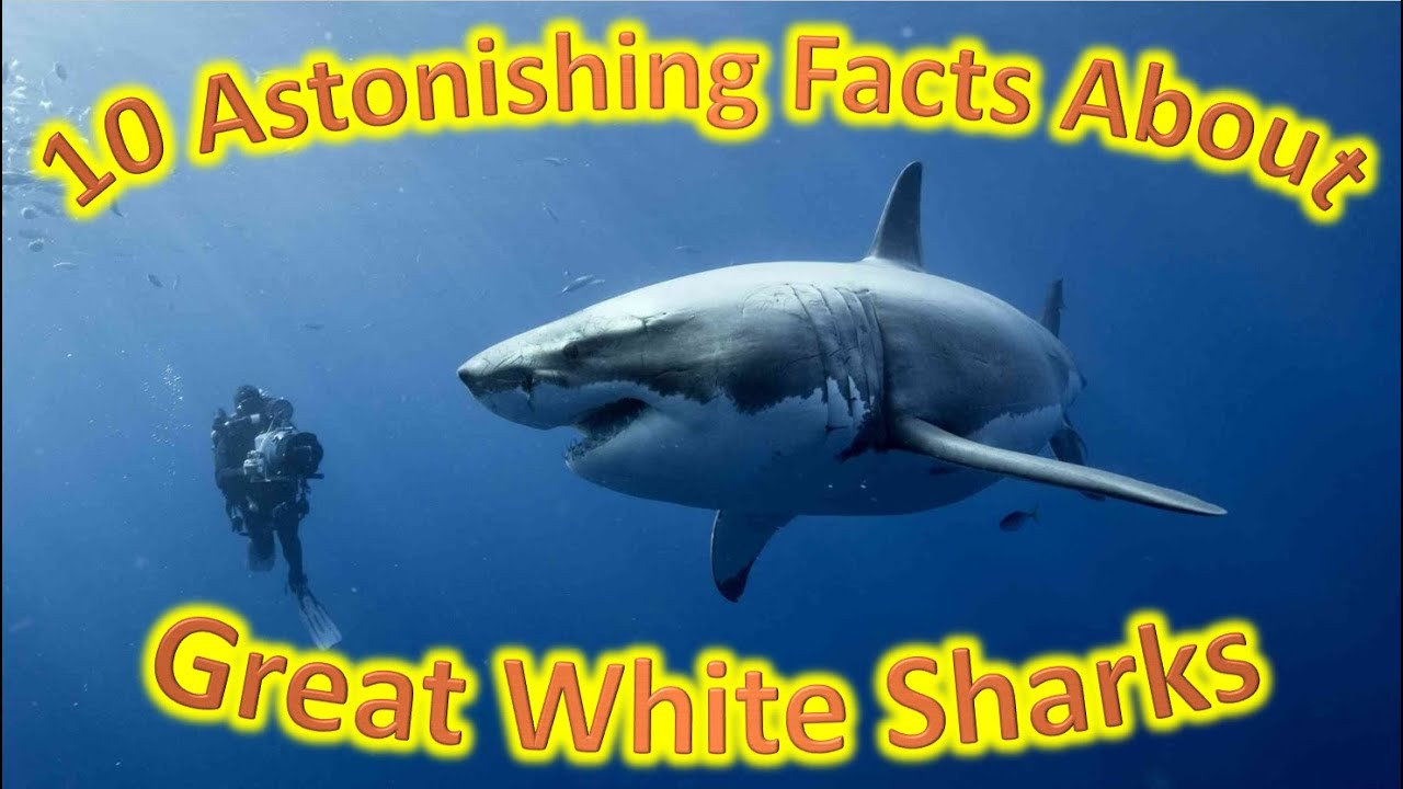 What The Fact - 10 Astonishing Facts About Great White ...