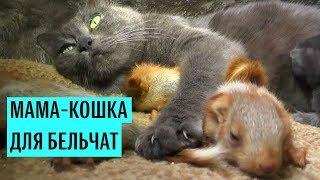 Мама-кошка для бельчат