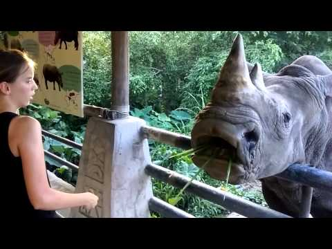Feeding a Rhino yum😏😏