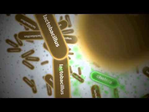 Biological Design: How Engineers Took Over Biology