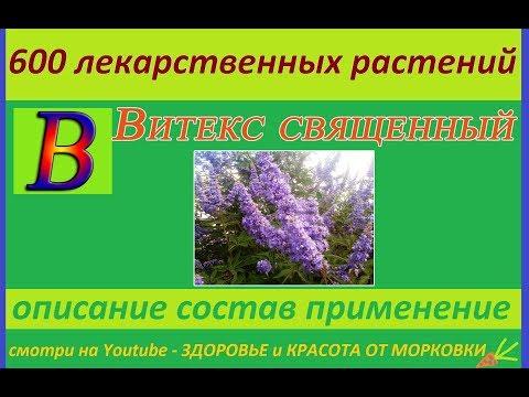 Вопрос: Можно ли вырастить витекс священный в условиях средней полосы России?