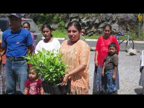 Frontier Co-op Organic Allspice Sourcing in Guatemala
