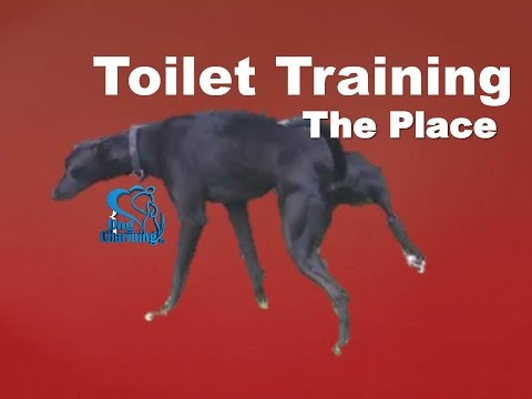 Toilet Training a Dog to Go in a New Place (Dog Charming)