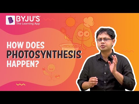 Phototropism - CBSE Class 10 Science Chapter 6 - Life