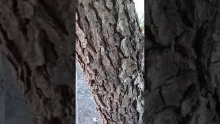 Strange strange tree