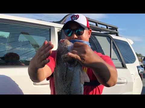 TAUTOG FISHING INDIAN RIVER INLET