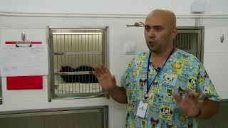 Стационар для животного: в столице появился госпиталь для четвероногих