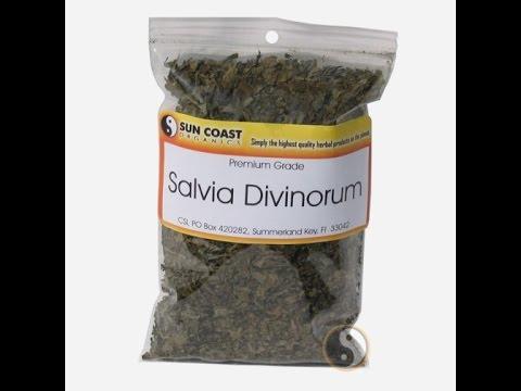 Salvia Divinorum Drug