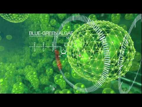 Water Wallpaper Hd Live Hd Exxon Mobil Cool Animation Blue Green Algae Red