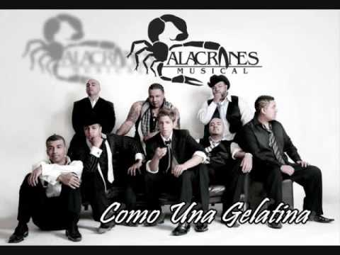 Alacranes Musical - Como Una Gelatina Lyrics | MetroLyrics