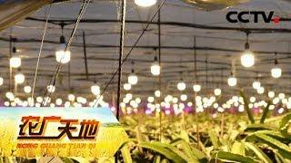 《农广天地》 让火龙果多产半年果的妙招 观光种植两不误 20190611   CCTV农业