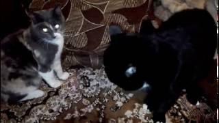 Коты балуются