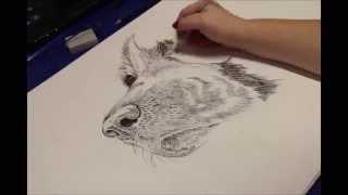 Springer Spaniel Speed Drawing
