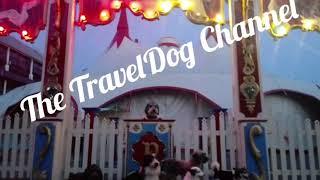 Meet real circus dogs!