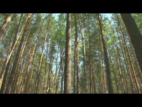 Видео Порно в лесу раком фото