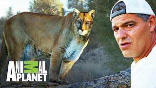 ¡Frank y el Puma! | Wild Frank en California | Animal Planet