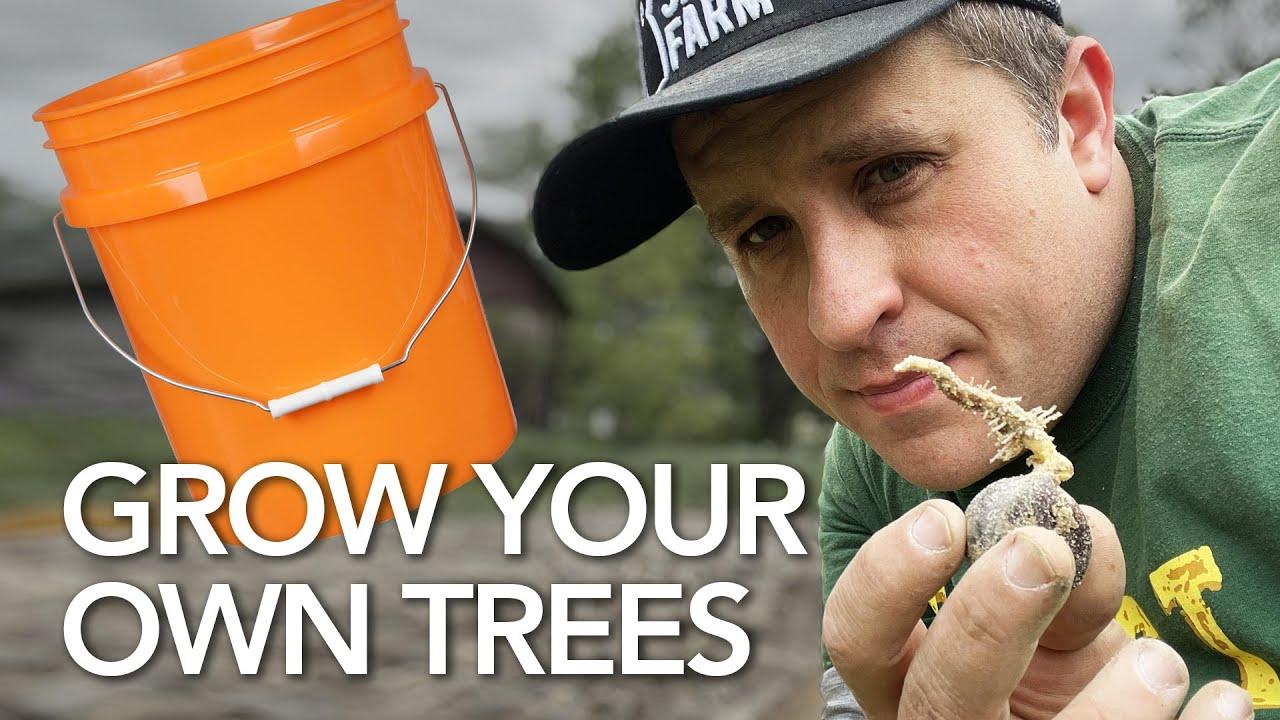 Growing Trees is the Ultimate Side Hustle